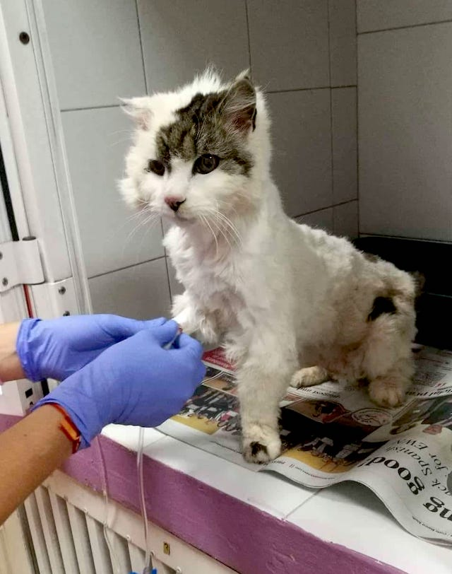 Clover an emaciated rescue cat who was cared for beautifully during her last days