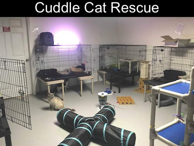 Cuddle Cat Rescue