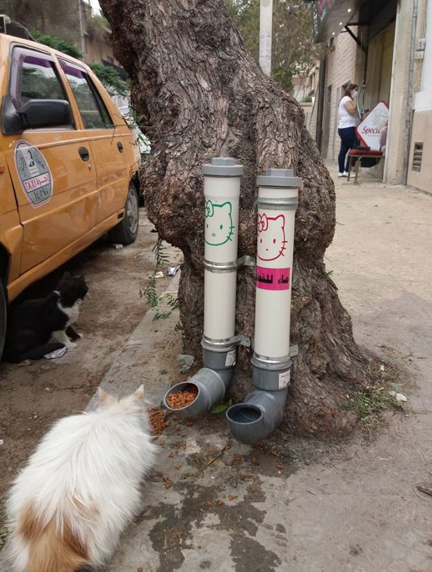 Feeding community cats in Syria using drainage pipes