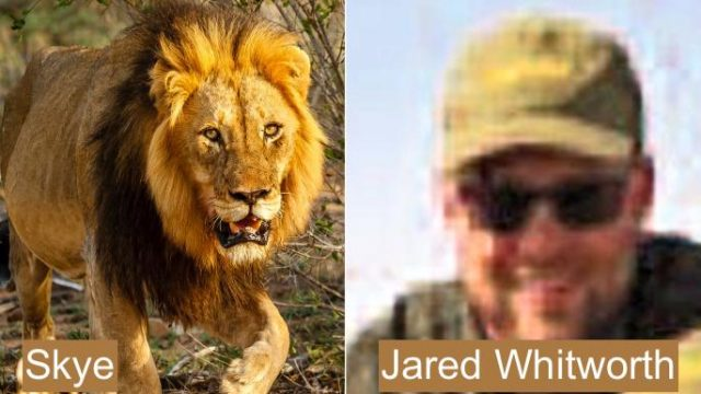 Jared Whitworth and Skye the lion he allegedly shot