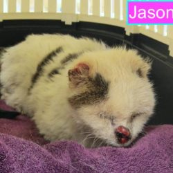 Jason a 24 year old cat who went missing