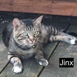 Jinx - a cat killed by the contents of a snow globe
