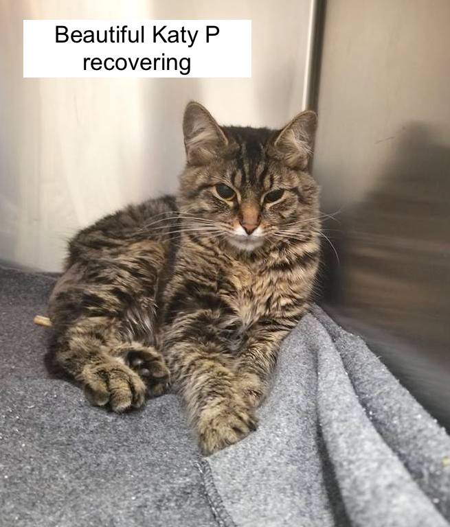 Katy P recovering at, I believe, the Humane Society of Richland County who took the photo.