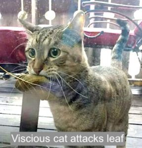 Leaf eating cat