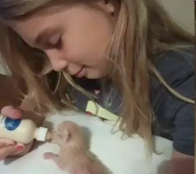 Ten-year-old girl electrocuted rescuing her kittens behind dryer