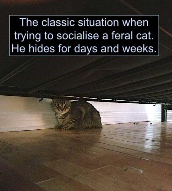 Socialising a feral cat. Cat hiding