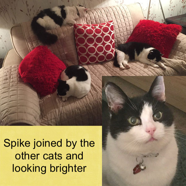 Spike was sad but in time he brightened up