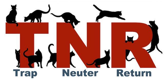 TNR image
