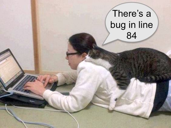 Why programmers are obsessed with cats