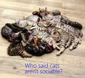 Sociable cats!