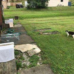 Borough ordinance on feeding feral cats