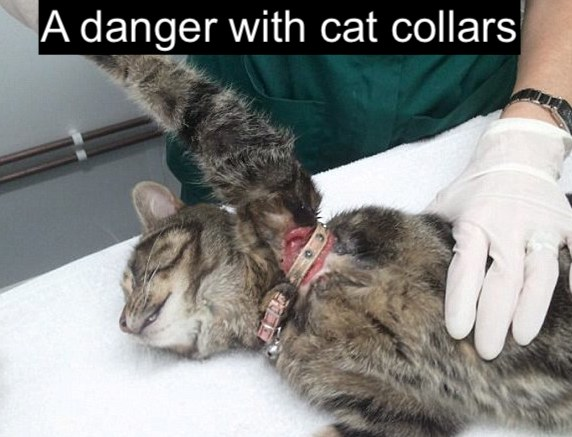 Cat collar injury