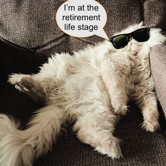 Cat life stages
