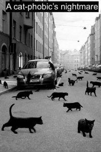 Cat-phobic's nightmare