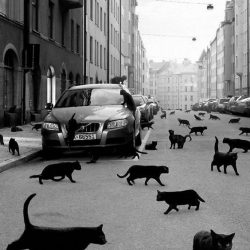 Cat-phobic's nightmare
