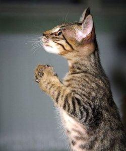 Cat praying. Is my cat an atheist?