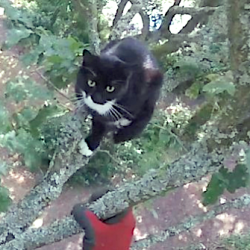 Cat rescued from tree bites rescuer who goes to hospital