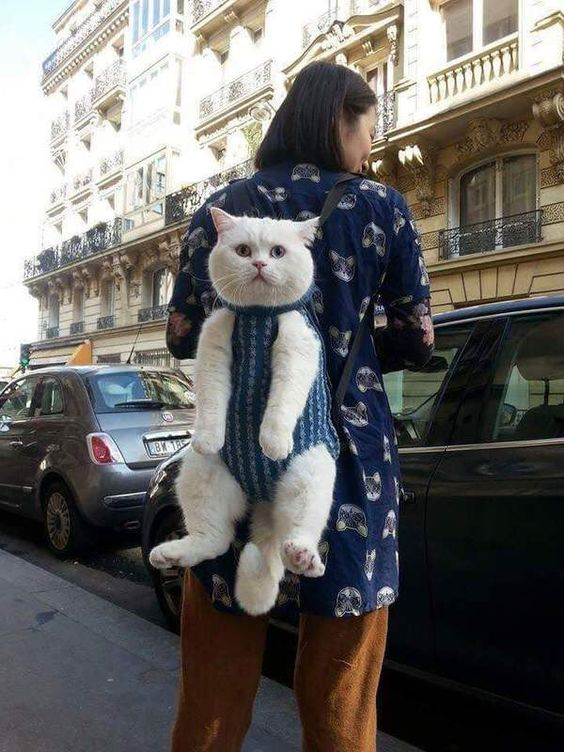 Cat transporter or carrier as a rucksack