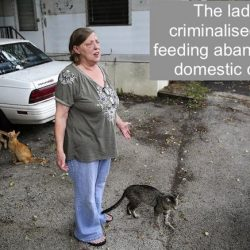 Lady charged for feeding cats