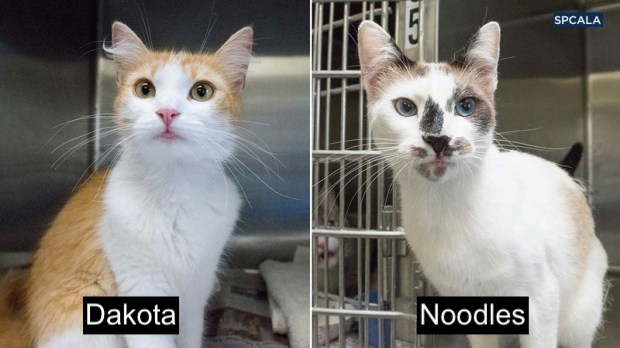 Dakota and Noodles trash bag cat saved and ready for adoption