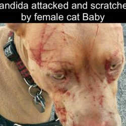 Dog scratched by female cat