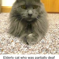 Elderly cat who was partially deaf