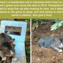 Grieving cat or anxious cat?
