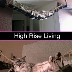 High rise living for a cat