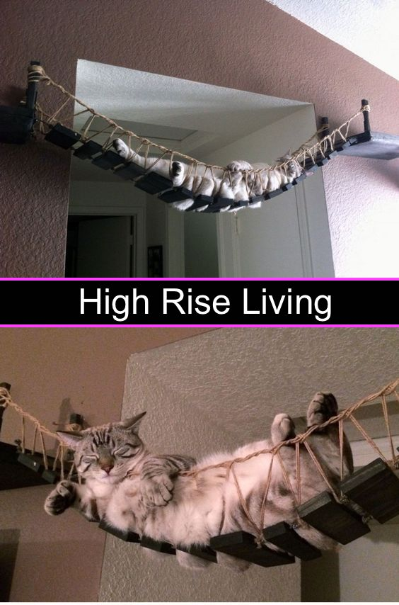 High rise living for a cat!