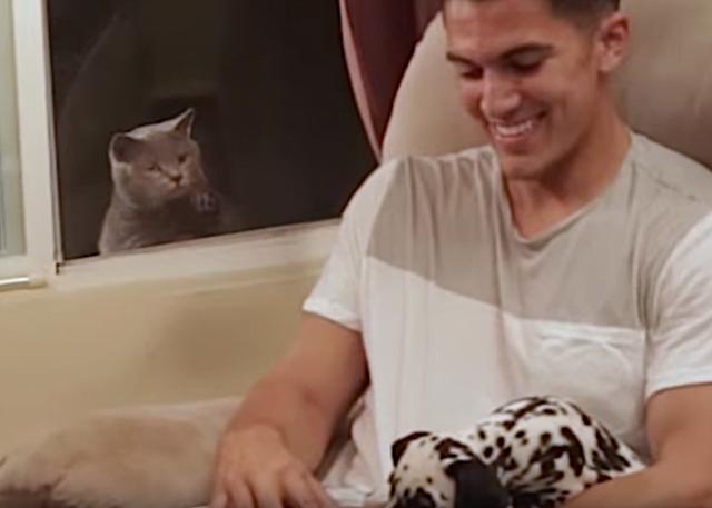 Jealous cat