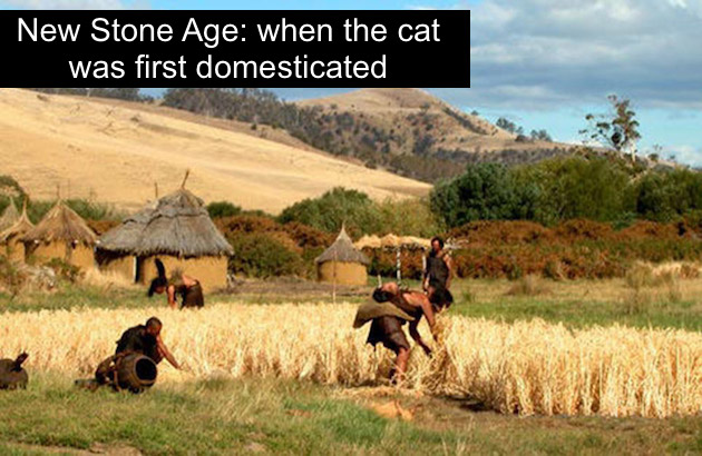 New Stone Age when the cat was first domesticated
