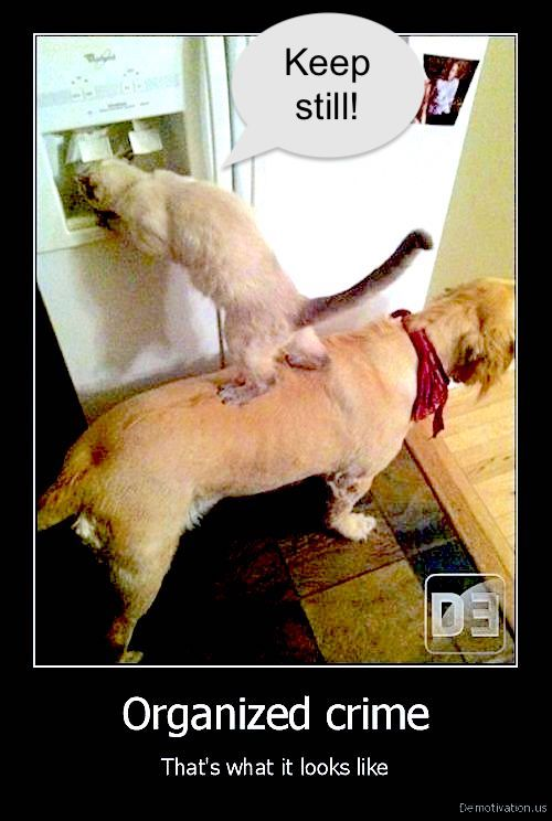 Organised crime -- cat and dog