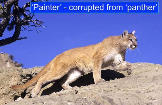 'Painter' corrupted from panther