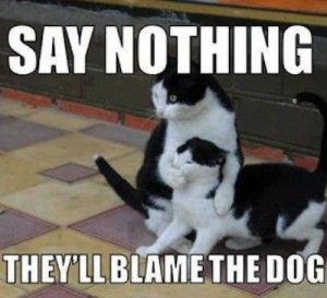 Say nothing they'll blame the dog