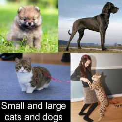 Small and large cats and dogs