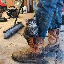 Tabby kitten rests on boot