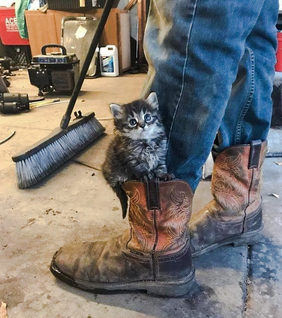 Tabby kitten rests on boot
