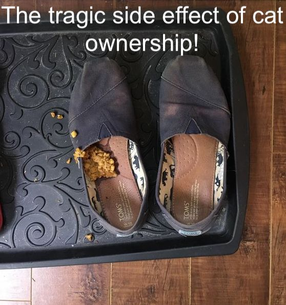 The tragic side effect of cat ownership