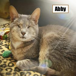 Abby - a 20-year-old blind cat abandoned by owners