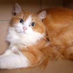 Beautiful cat dumped at shelter because she had diarrhea