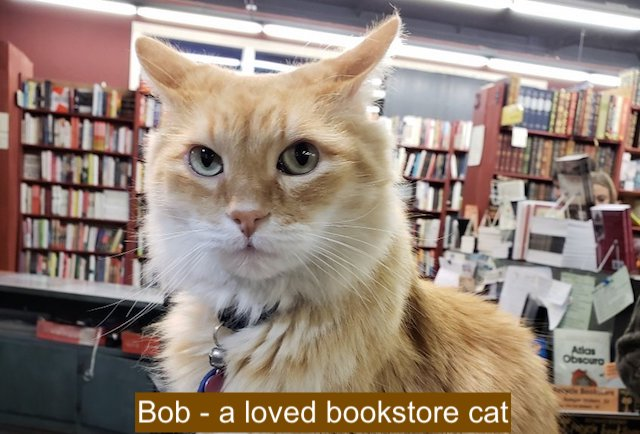 Bob a bookstore cat in California