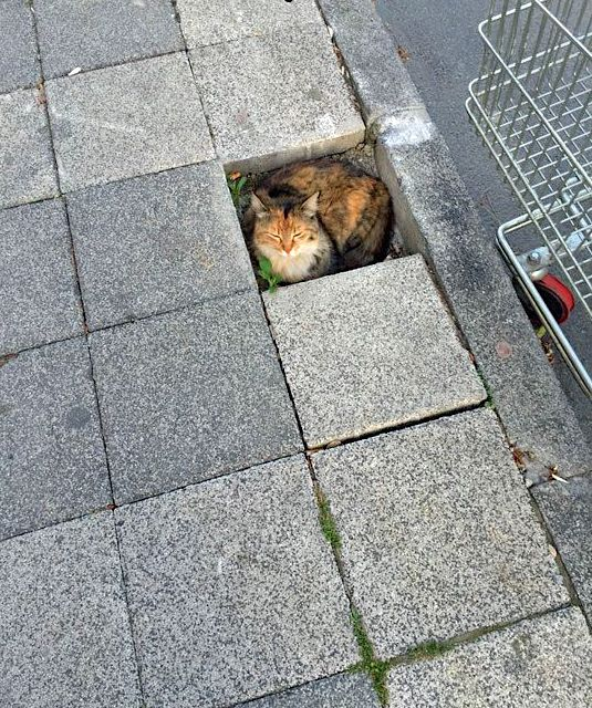 Cat curls up in hole in pavement and looks content but at the same time vulnerable.