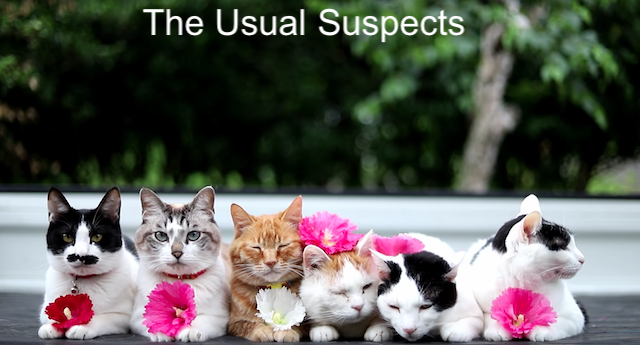 Cats - The Usual Suspects