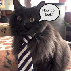 Cat's first day at work