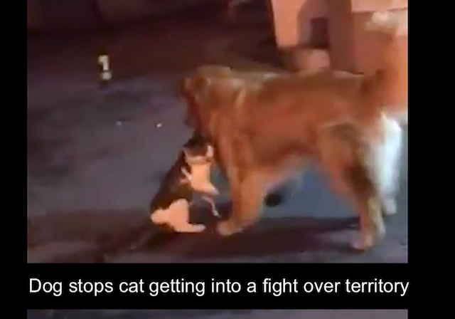 Dog stops cat friend getting into a fight over territory