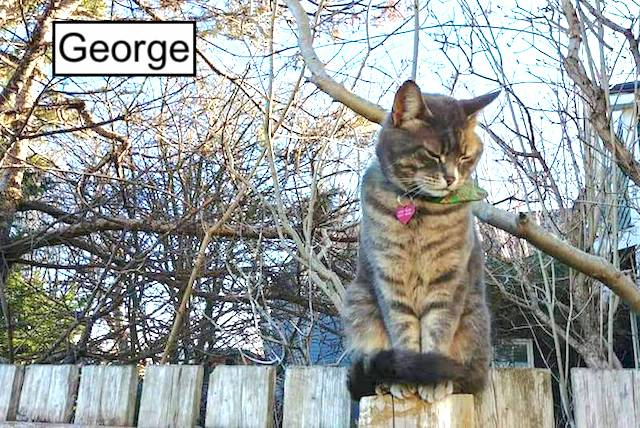 George a cat killed on the road and thrown on landfill