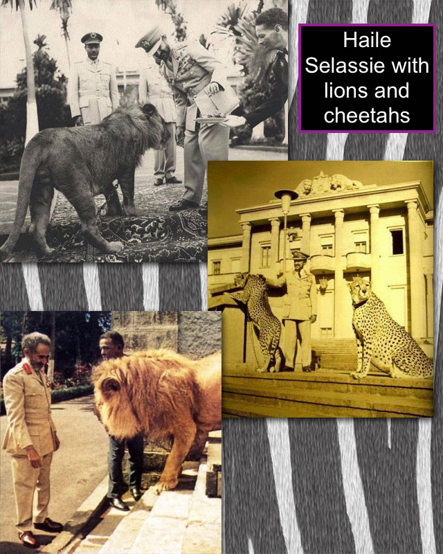 Haile Selassie with lions and cheetahs