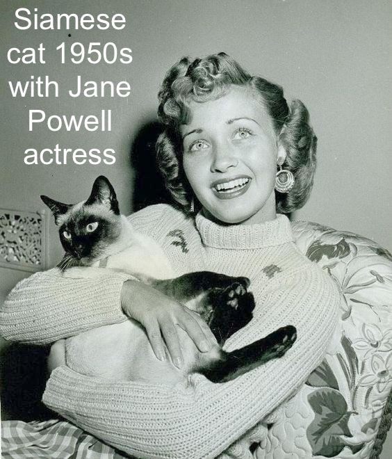 Jane Powell and Siamese cat 1940s and 50s