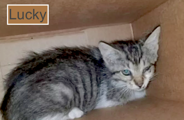 Lucky a cat rescued from road after being dumped from moving truck