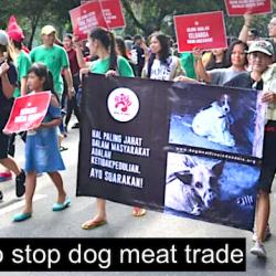 Photo: Dog Meat-Free Indonesia
